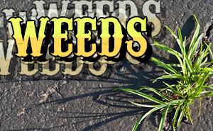 weeds_slider